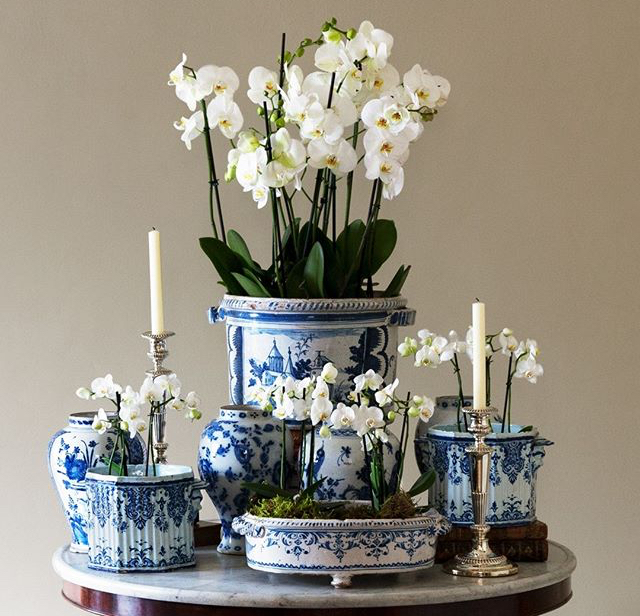 Caring for your Orchids at Home